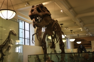 American Museum of Natural History de New York