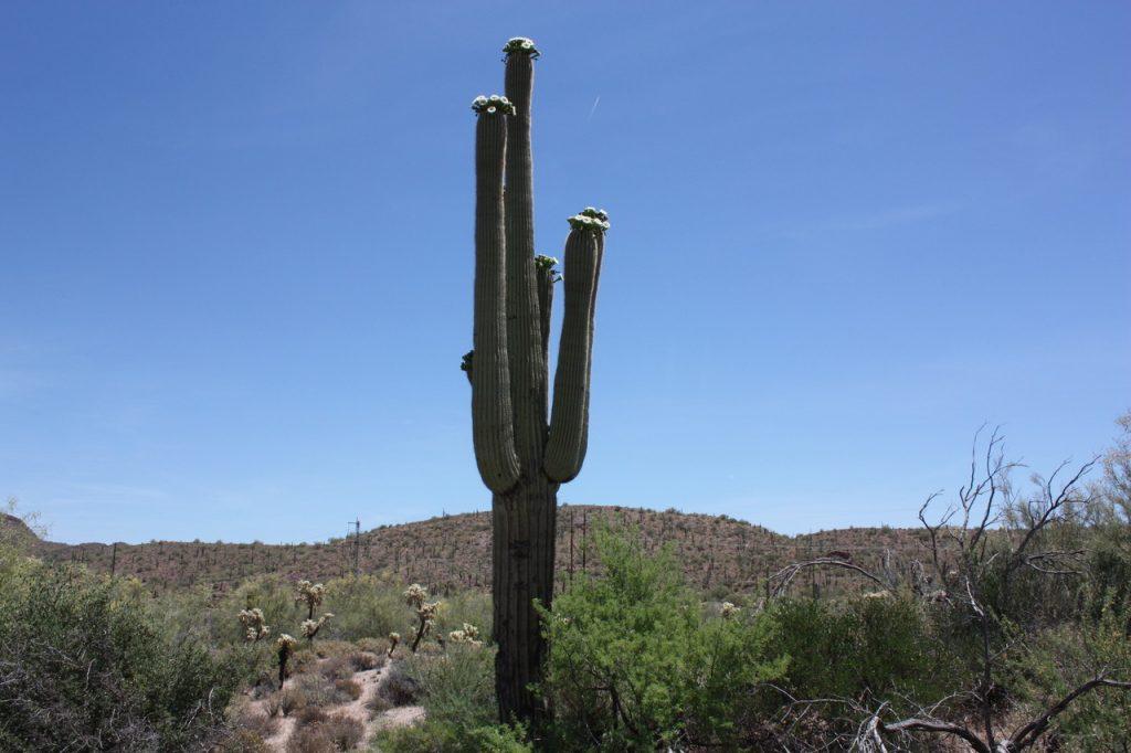 Un Cactus en Arizona sur la côte Ouest Américaine