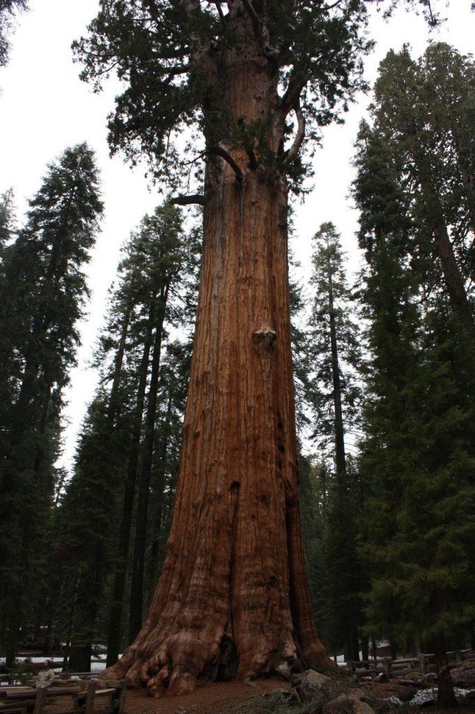 Sequoia Park - Ouest Américain