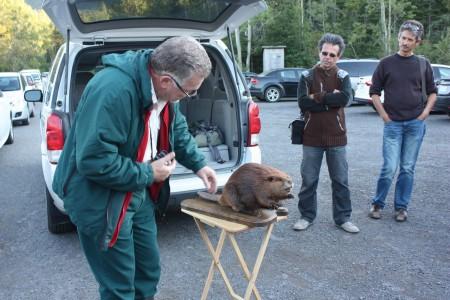Etude des castors au Parc du Canada Fourillon