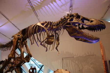 Royal Ontario Museum de Toronto