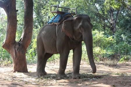 Chiang Mai en éléphant