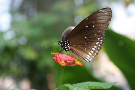 ferme aux orchidées et aux papillons