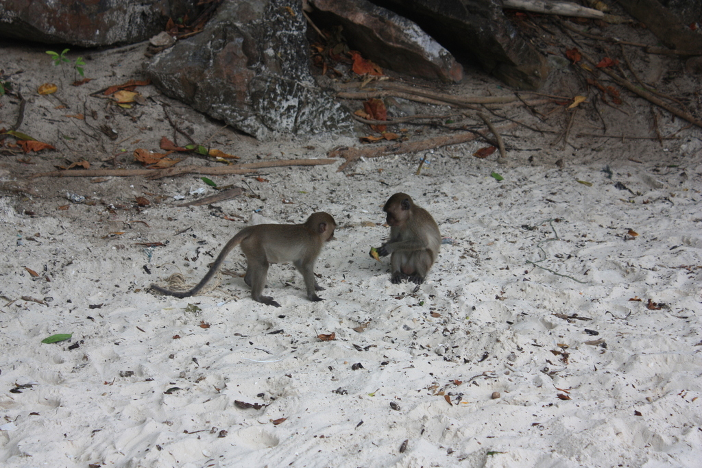 Monkey Beach près de Koh Phi Phi en Thaïlande