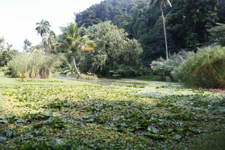 Le jardin d'eau de Vaipiti en Polynésie