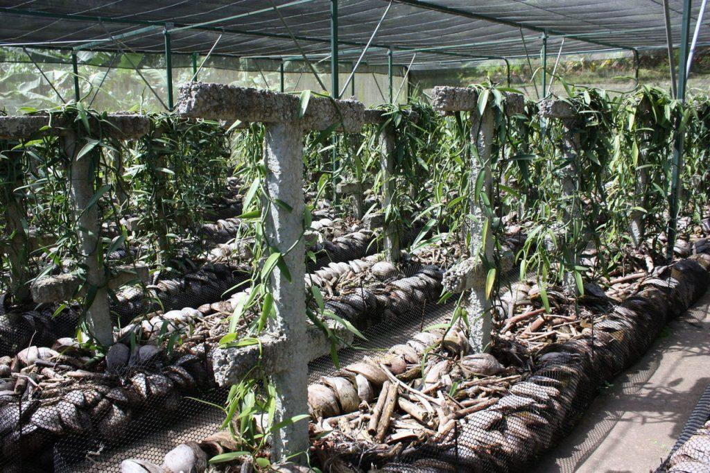 Le Jardin Tropical de Moorea