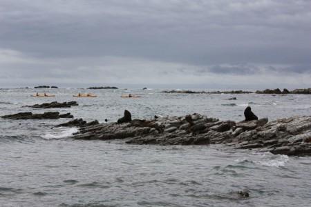 Phoques à Kean Point en Nouvelle-Zélande