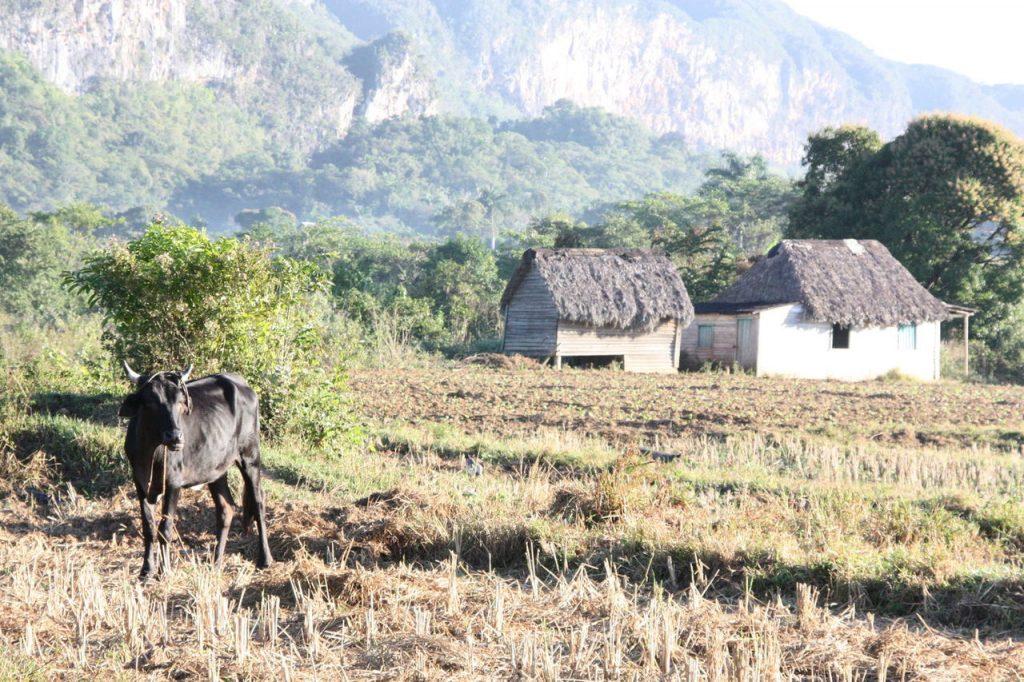 Les champs de Vinales à Cuba