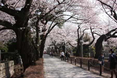 Le cimetière d'Aoyama à Tokyo