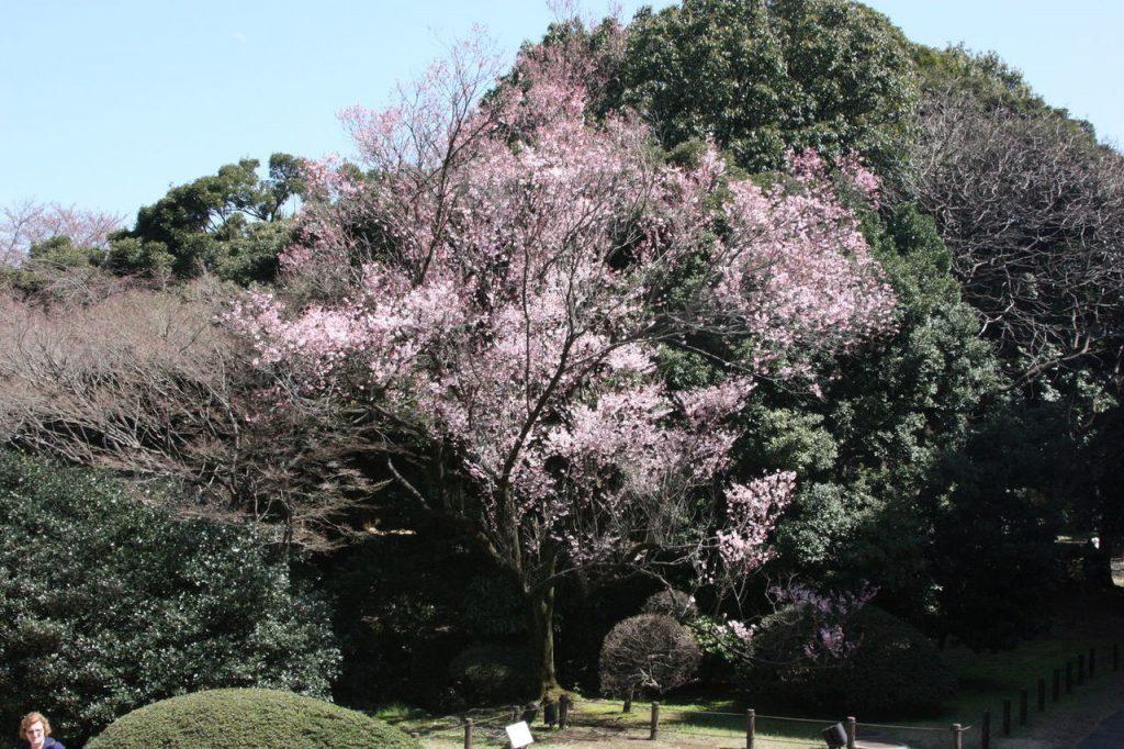 Le jardin du Musée National de Tokyo