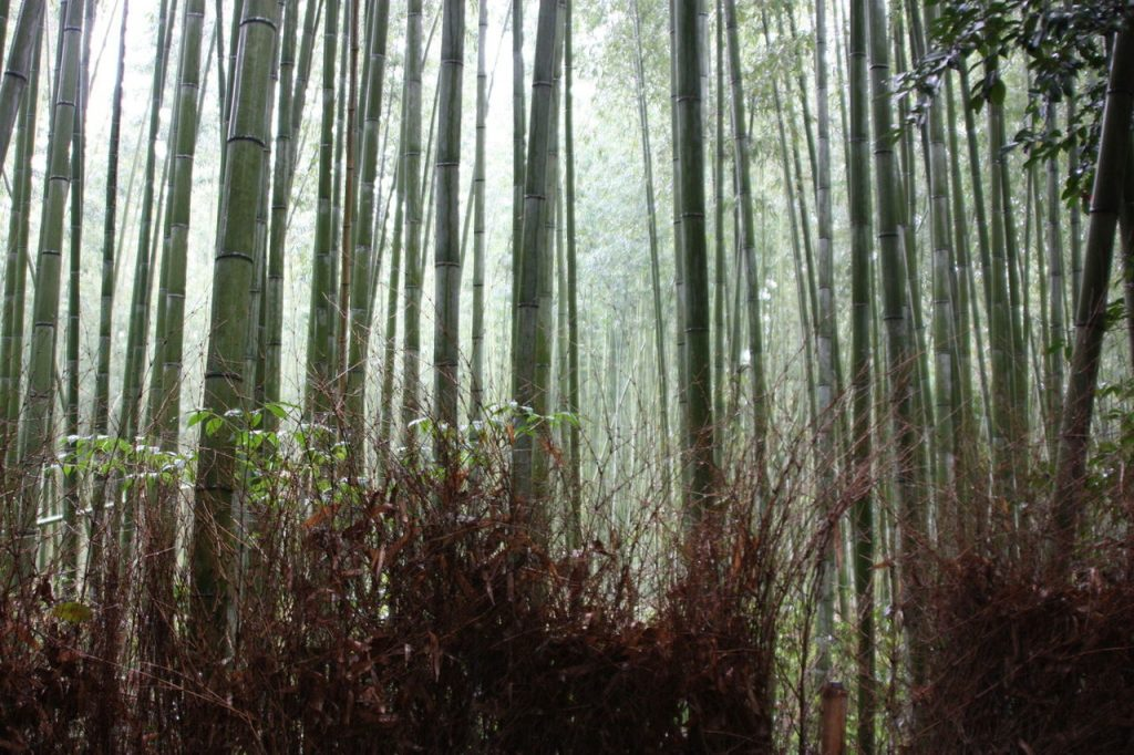 La Bambouseraie d'Arashiyama à Kyoto au Japon