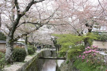 Le Chemin des Philosophes à Kyoto au Japon