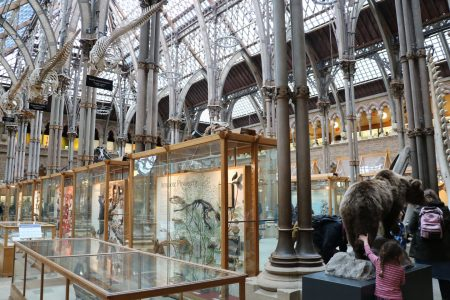 Museum of Natural History d'Oxford en Angleterre